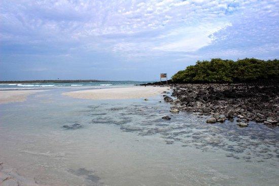 Galapagos Beach at Tortuga Bay: Tortuga Bay