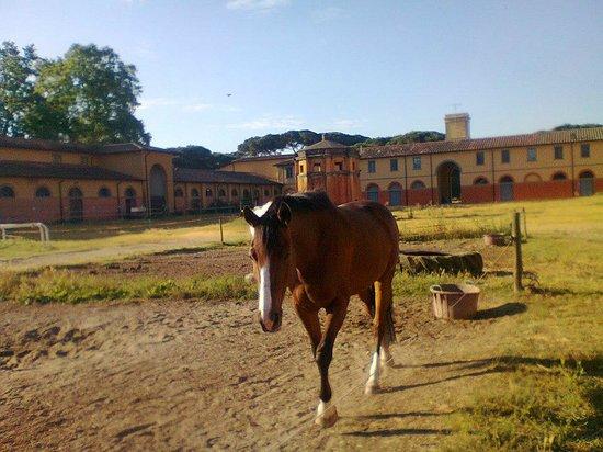 Casale La Sterpaia: i cavalli a san rossore