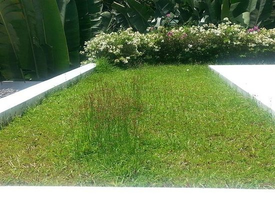 Infinity Residences & Resort Koh Samui: Weeds next to our terrace