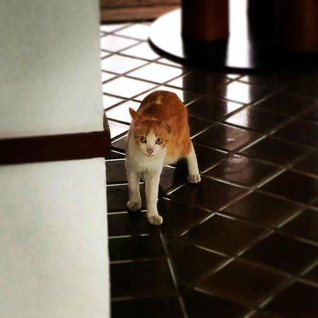 The Sukhothai Bangkok: 猫ちゃんが