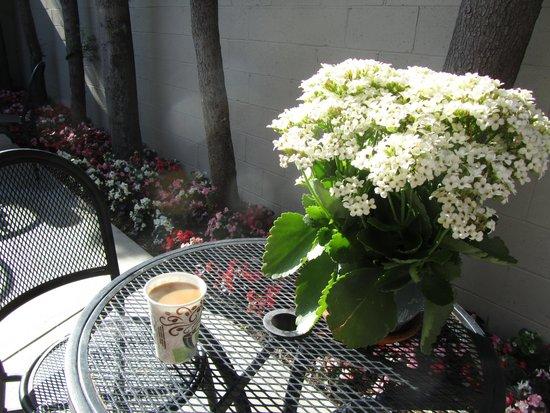 Travelodge Hotel LAX Los Angeles Intl: Breakfast
