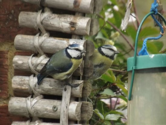 March Cottage B&B: Some of the garden wildlife.