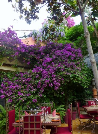 El Figon: The garden