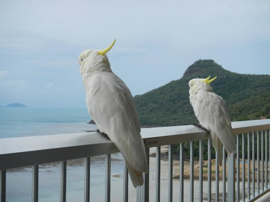 Reef View Hotel: Friendly cockatoos - don't feed them!