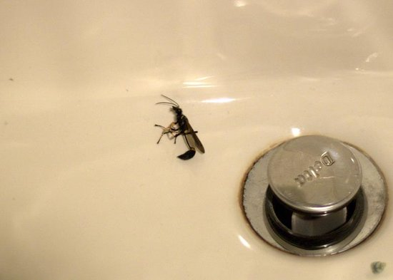 Cove Haven Resort: Wasp in sink