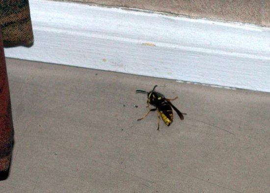 Cove Haven Resort : wasp near window