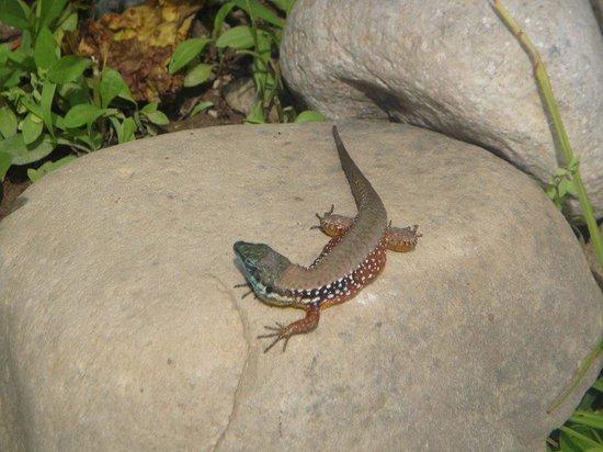 SENTIDO Sultan Beldibi : Lots of colourful lizards