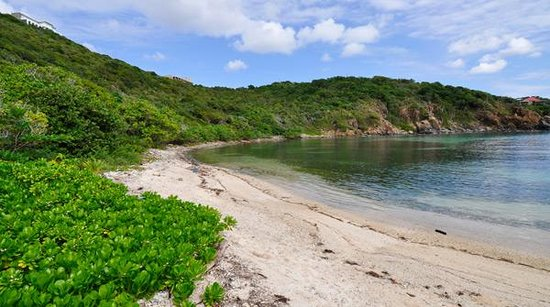 Virgin Islands Campground: Limestone Beach