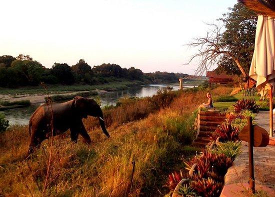 Khandizwe River Lodge: Elephants visiting