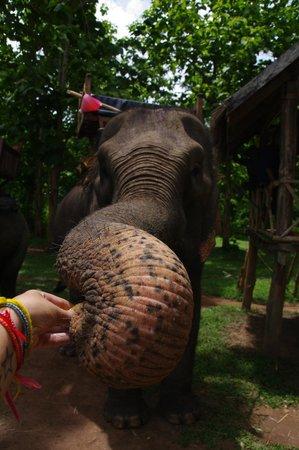 Elephant Village Sanctuary Day Trips: Feeding my elephant to say kop chai lai lai