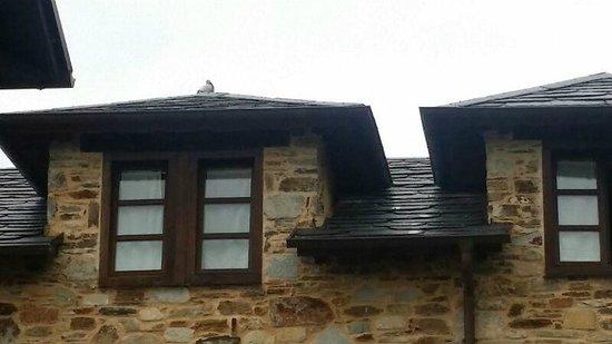 Casa Cachon: El palomo en discordia
