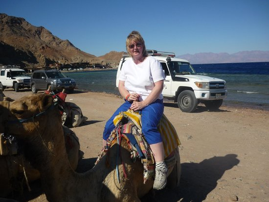 Sharm Wonders - Day Tours: the camel ride