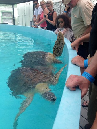 The Turtle Hospital: Wave to everyone!