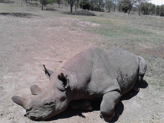 Porini Rhino Camp: Baraka the visually impaired Rhino
