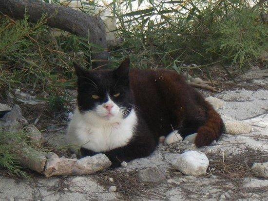 Sarakiniko Beach: kitty at the beach!