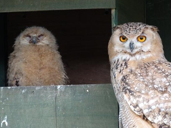 Scottish Owl Centre: a proud parent