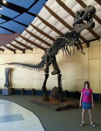 The Schiele Museum of Natural History: T Rex in the Entrance Lobby