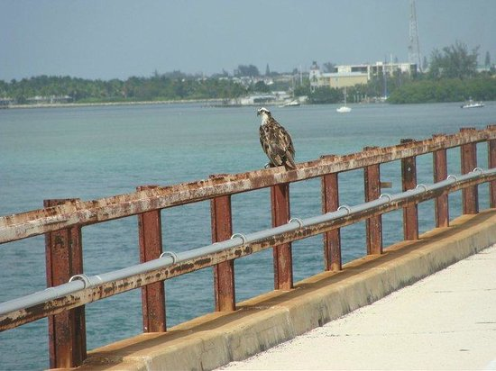 Great fishing at the base of the bridge picture of old for Florida keys bridge fishing