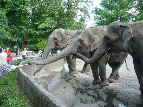 Tierpark Hagenbeck: Tierpark Carl Hagenbeck
