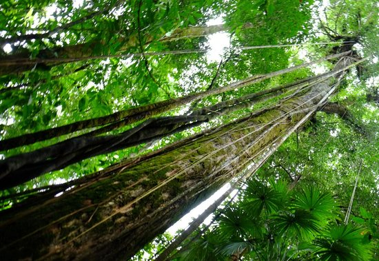 Corcovado National Park : forest