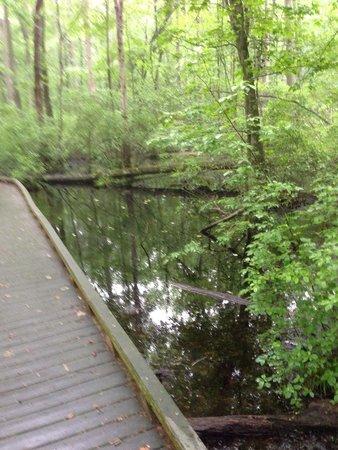 Great Swamp National Wildlife Refuge: Swamp area