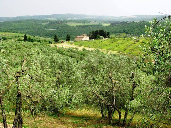 Wine Tours with Italy and Wine: Beautiful Tuscan scenery