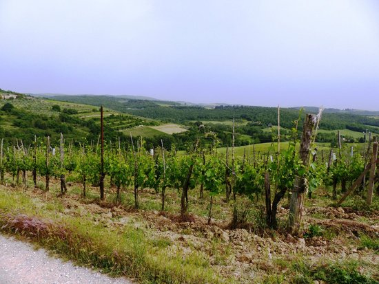 Tuscan Wine Tour : the view from the second stop