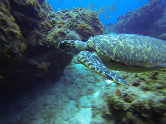 Always Diving & Water Sports: Tons of Turtles