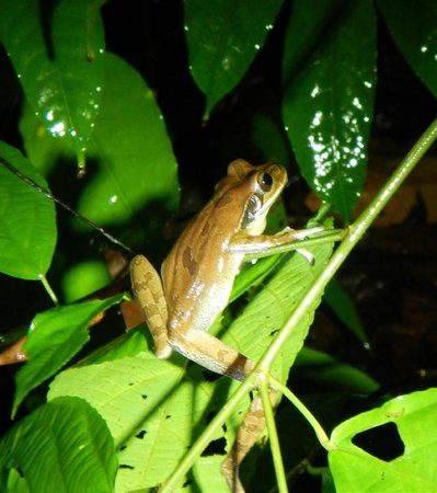Greentique Costa Rica Tours: Frog