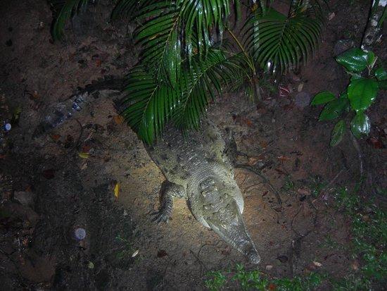 Greentique Costa Rica Tours: Croc