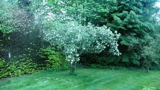 Rosebank House: Apple blossom at Rosebank