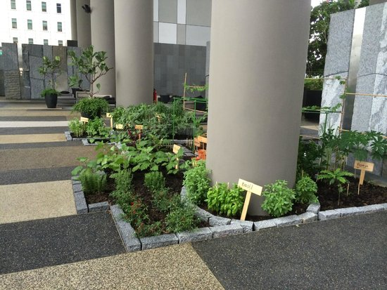 PARKROYAL on Pickering: Herb garden (so cute)