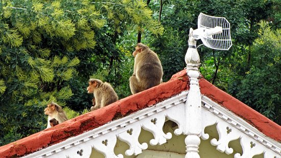 King's Cliff: Monkeys on the roof