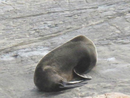 Kingscote, Australia: More NZ Seal