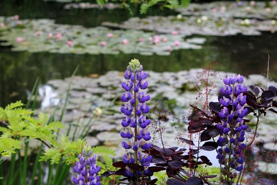 Maison et jardins de Claude Monet : really beautiful flowers in garden