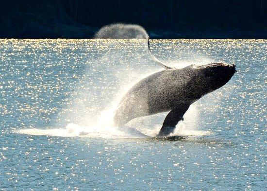 Juneau Tours: Whale in Auke Bay