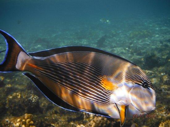 Renaissance Sharm El Sheikh Golden View Beach Resort: Подводный мир