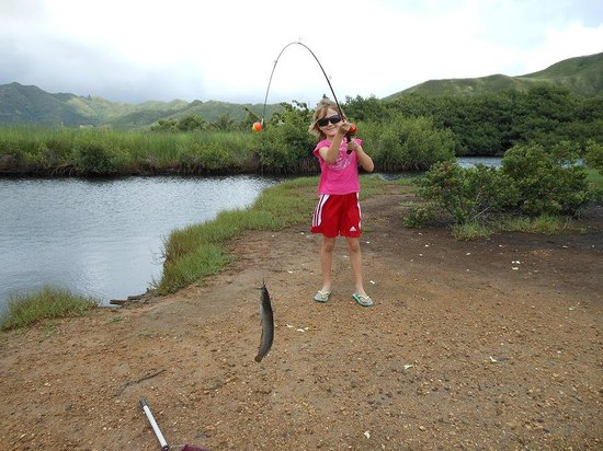 Kawai Nui Marsh: Catfish from the marsh