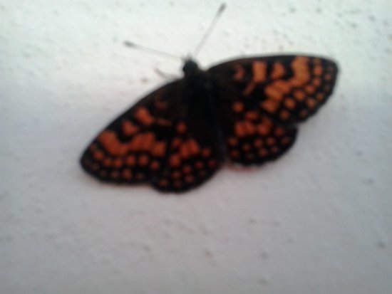 Riserva Naturale Val di Mello : la farfalla della pioda