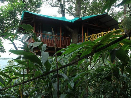 Dream Catcher Plantation Resort : tree house