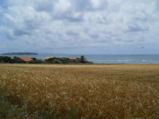 Oasi di Seu: campi di grano che si perdono nel mare