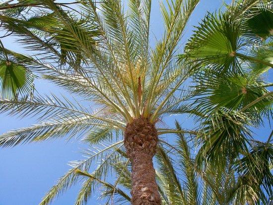 Playacalida Spa Hotel: Hotel Garten