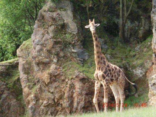 Cabarceno Nature Park: Es una maravilla de parque, esta muy bien cuidado tanto el parque como los animales. Merece la p