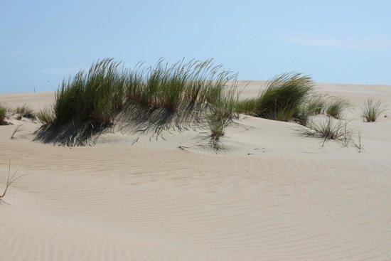 Jockey's Ridge State Park: Sand Dunes