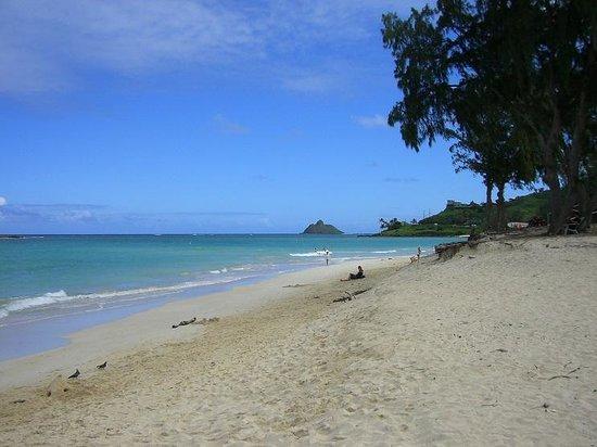 Kailua Beach Park: 西側からラニカイ・ビーチ側を見た景色