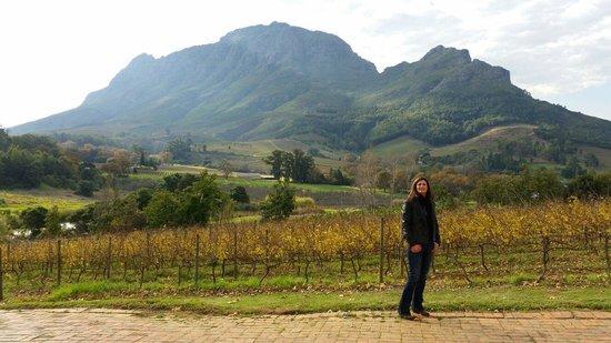 Alluvia Wine Estate: A beautiful sunny winters day at Alluvia Wine tasting rooms