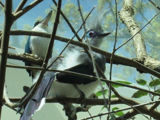 Toledo Zoo: Not sure what kind of bird this is ...