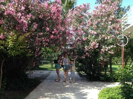 Sailor's Beach Club: Цветущие аллеи