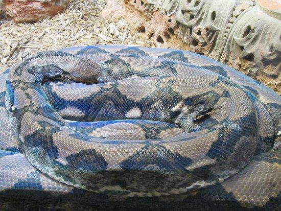 Toledo Zoo: A python!