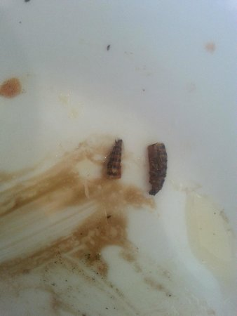 Da Mimmo's: insect on starter dish...